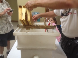 uncapping frames of honey